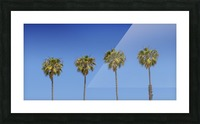 Lovely Palm Trees | Panorama Picture Frame print