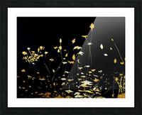 Little Chrysanthemum Picture Frame print