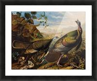 Wild Turkeys Picture Frame print
