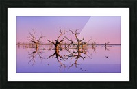 Twin Reflections - Pamamaroo Lake Picture Frame print