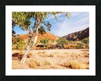 Ghost Gum  - Central Australia 3 Picture Frame print