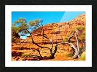 Twisted Tree - Kings Canyon Picture Frame print