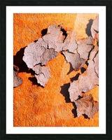 Salmon Bark Peeling 2 Picture Frame print