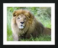 Simba Picture Frame print