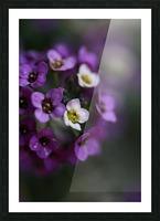 Flower Ball Allysium Flowers Picture Frame print