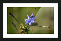 Flowers_ Picture Frame print