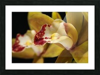 Green and Red Orchid Picture Frame print