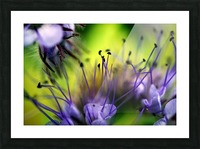 Abstract Pop Color Flower Photography 17 Picture Frame print