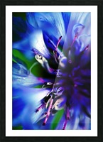 Abstract Pop Color Flower Photography 21 Picture Frame print