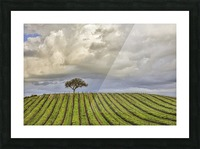 alone among the vines Picture Frame print