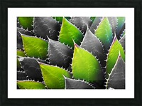 Thorny Picture Frame print