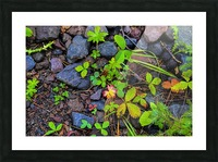 Forest floor Picture Frame print