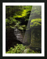 Trail of the Cedars Picture Frame print