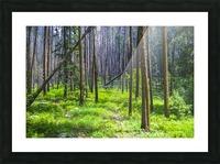 Density Picture Frame print
