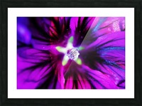 Abstract Pop Color Flower Photography 38 Picture Frame print