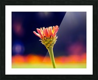 Flower buds Picture Frame print