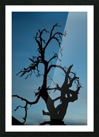Haunted Tree Picture Frame print