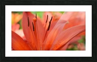 Beautiful In Orange Photography Picture Frame print