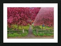 pinkdream1 Picture Frame print