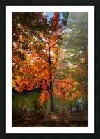 A fall colors tree Impression et Cadre photo