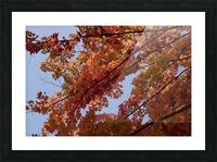 Autumn tree Picture Frame print