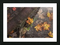 Fallen Leaves Picture Frame print
