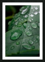 After rain Picture Frame print