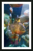 Playful fish Picture Frame print