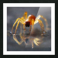 Spider reflecting Picture Frame print