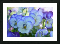 Blue Flower Garden Photograph Picture Frame print