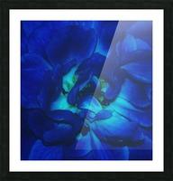 Blue Rose    Picture Frame print