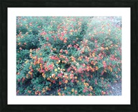 Summer red flowers Picture Frame print