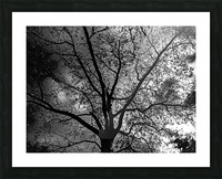 _1150920_1572477007.8786 Picture Frame print