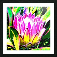 pink protea Picture Frame print