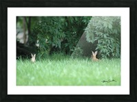 Bunnies Two Picture Frame print