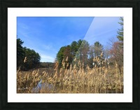 Simsbury Wetland Picture Frame print