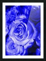 Rose blue Picture Frame print