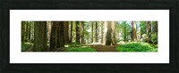 Redwood National Park Picture Frame print