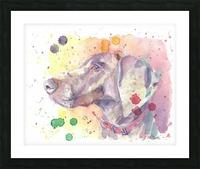 Weimaraner Dog - Portrait of Nandi Picture Frame print