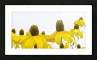 Sunshine Panorama Picture Frame print