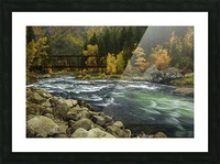 Flow of life Picture Frame print