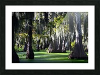 Swampy Picture Frame print