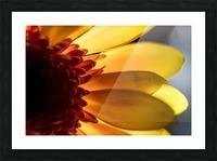 Jaune 3 Picture Frame print