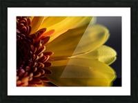 Jaune 1 Picture Frame print