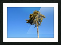 Windy  Picture Frame print