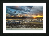 Sunrise at the Bosque Picture Frame print