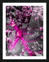 Inspire 2 Impression et Cadre photo