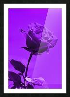 Love Rose purple 8665 Picture Frame print