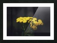 Bouquet Picture Frame print