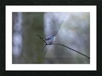Blue Yonder Picture Frame print